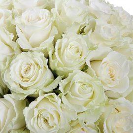 Розы Мондиаль