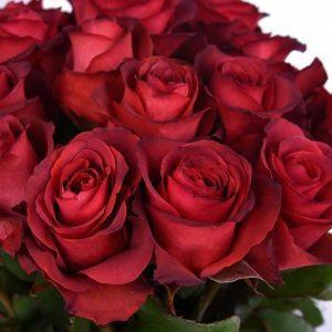 купить Розы Матильда
