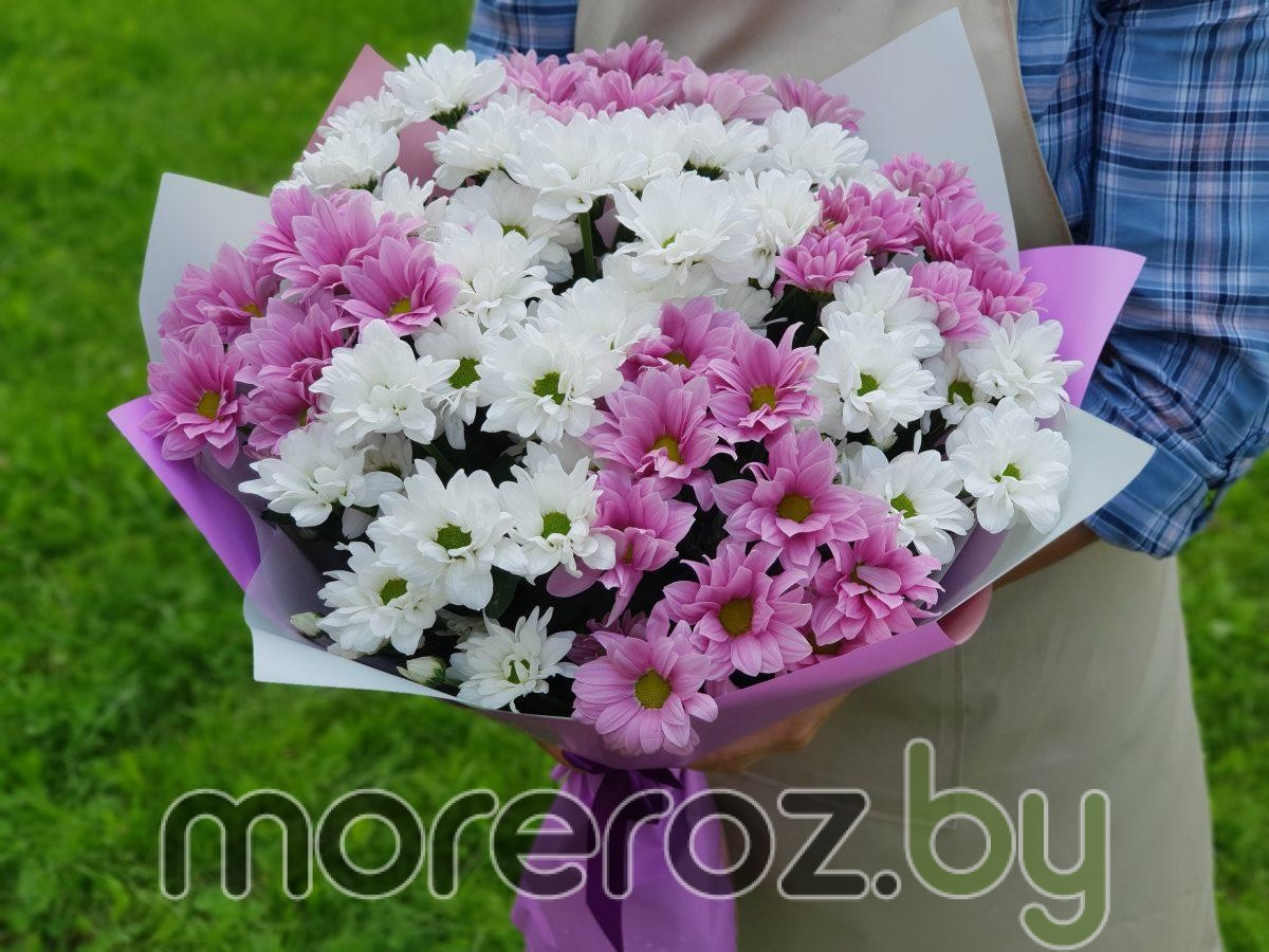 букет бело-розовых хризантем
