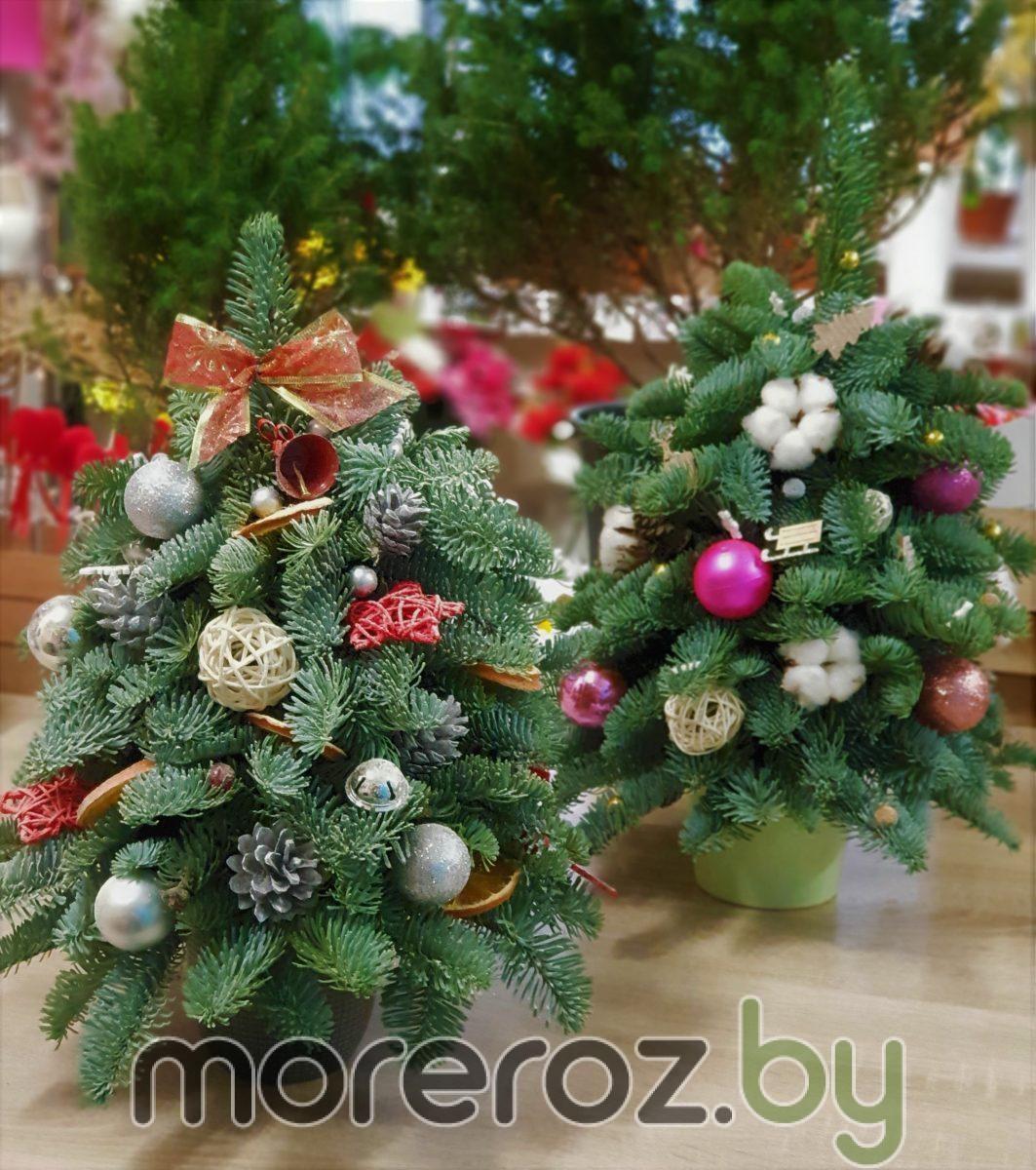 Новогодние ёлочки из пихты Нобилис