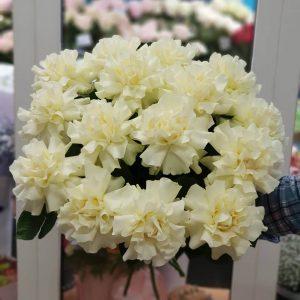 Белые французские розы