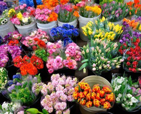 цветы по оптовым ценам
